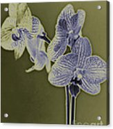 New Photographic Art Print For Sale Orchids 10 Acrylic Print