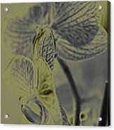 New Photographic Art Print For Sale Orchids 11 Acrylic Print