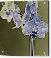 New Photographic Art Print For Sale Orchids 9 Acrylic Print