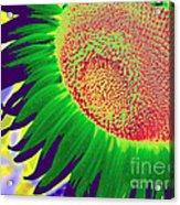 New Photographic Art Print For Sale Pop Art Sunflower 2 Acrylic Print