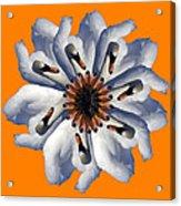 New Photographic Art Print For Sale Pop Art Swan Flower On Orange Acrylic Print