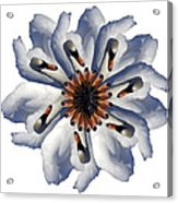 New Photographic Art Print For Sale Pop Art Swan Flower On White Acrylic Print