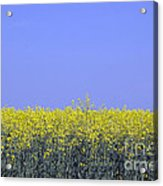 New Photographic Art Print For Sale Yellow English Fields 2 Acrylic Print