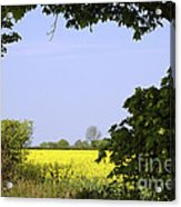 New Photographic Art Print For Sale Yellow English Fields 3 Acrylic Print