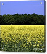 New Photographic Art Print For Sale Yellow English Fields Acrylic Print