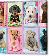 New Puppy Multipic Acrylic Print by Greg Cuddiford
