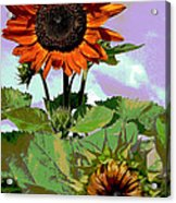 New Sunflowers Acrylic Print by Annette Allman