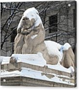 New York Public Library Lion Acrylic Print