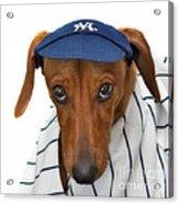New York Yankee Hotdog Acrylic Print
