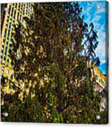 New York's Holiday Tree Acrylic Print