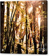 New Zealand Bush Acrylic Print