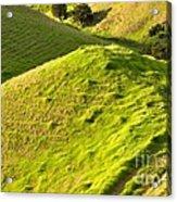 New Zealand Farmland Acrylic Print
