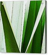 New Zealand Flax Simplified Acrylic Print