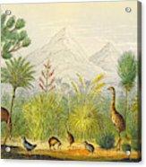 New Zealand Kiwi, Takahe, Extinct Moa Acrylic Print