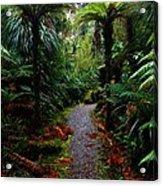 New Zealand Rainforest Acrylic Print