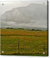 New Zealand Sheep Farm Acrylic Print