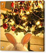 New Zealand White Rabbit Under The Christmas Tree Acrylic Print