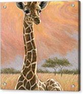 Newborn Giraffe Acrylic Print