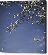 Next Time I'll Be Sweeter Acrylic Print