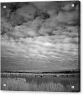 nfrared picture of the nature area Dwingelderveld in Netherlands Acrylic Print by Ronald Jansen
