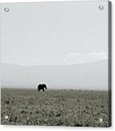Ngorongoro Crater Acrylic Print