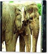 Niabi Asian Elephants Acrylic Print