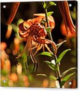 Night Bloom II Acrylic Print