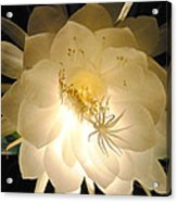 Night Bloomer Acrylic Print