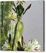 Night-blooming Cereus Acrylic Print