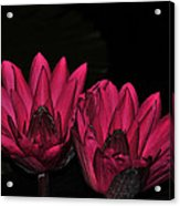 Night Blooming Lily 1 Of 2 Acrylic Print
