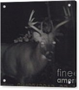 Night Buck Acrylic Print