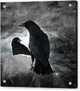 Mysterious Night Crows Acrylic Print