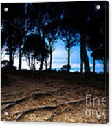 Night In The Forest Acrylic Print