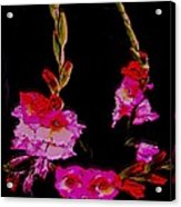 Night Miracle-sword Lily Acrylic Print