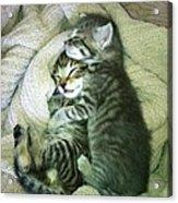 Night Night Kitties Acrylic Print