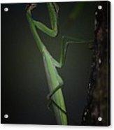 Night Of The Praying Mantis Acrylic Print