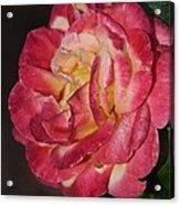 Night Rose Acrylic Print