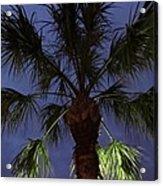 Night Sky Through The Palm Acrylic Print