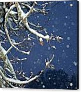 Night Snow Acrylic Print