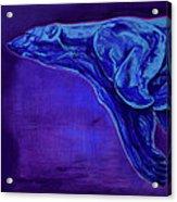 Night Swimmer Acrylic Print