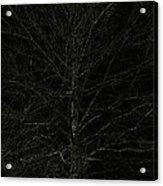 Night Tree Acrylic Print