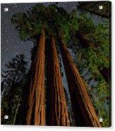 Night View Of Giant Sequoia Trees Acrylic Print