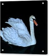 Nighttime Swim Acrylic Print