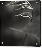 Nike Of Samothrace Acrylic Print