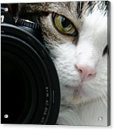 Nikon Kitty Acrylic Print by Andee Design