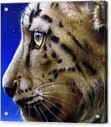 Nina The Snow Leopard Acrylic Print