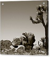 Joshua Tree National Park Landscape No 4 In Sepia  Acrylic Print