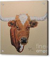 No Bull Acrylic Print