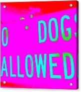 No Dogs Allowed Acrylic Print