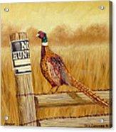 No Hunting   Pheasant Acrylic Print